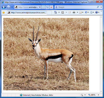Gazelle - Microsoft Browser-Prototyp